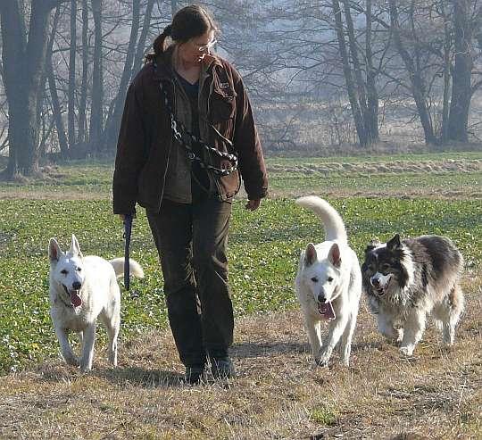hunde riechen besser als menschen